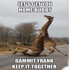 drunk-giraffe