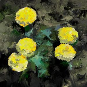 night marigolds